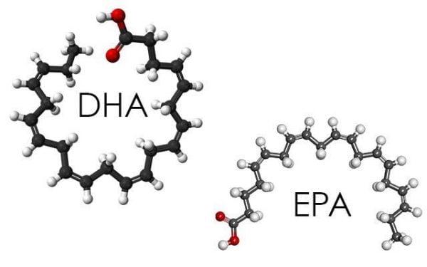 DHA và EPA là những dưỡng chất rất cần thiết cho tế bào