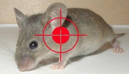 Hiệu quả diệt cả đàn chuột | Hiệu quả diệt cả đàn chuột