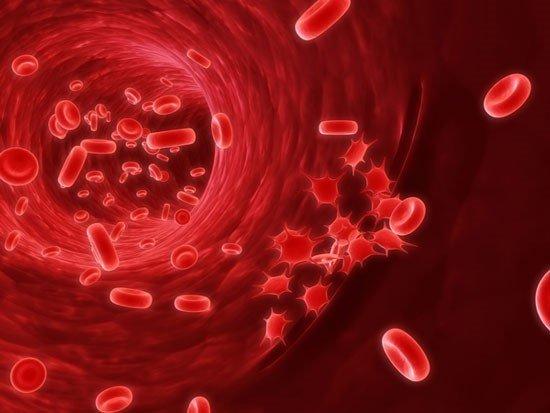 Đậu lăng giúp bổ máu | Đậu lăng giúp bổ máu