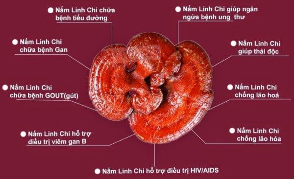 tác dụng của nấm linh chi | tác dụng của nấm linh chi